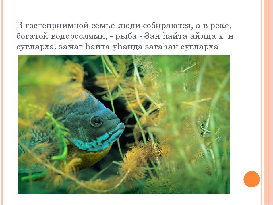В гостеприимной семье люди собираются, а в реке, богатой водорослями, - рыба...