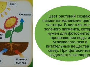 Цвет растений создают пигменты-маленькие цветные частицы. В листьях много зе