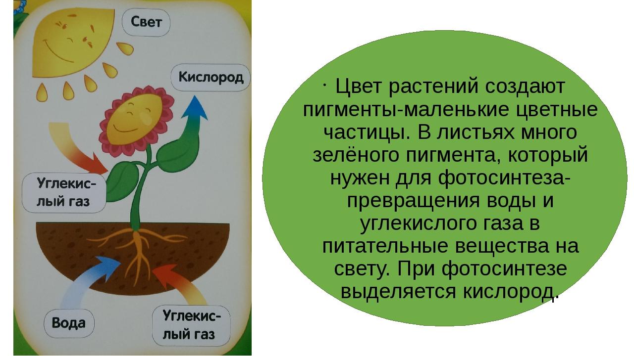 Цвет растений создают пигменты-маленькие цветные частицы. В листьях много зе...