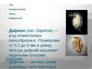 Дафния Тип: Членистоногие Класс: Жаброногие Дафнии (лат.Daphnia)— род планк
