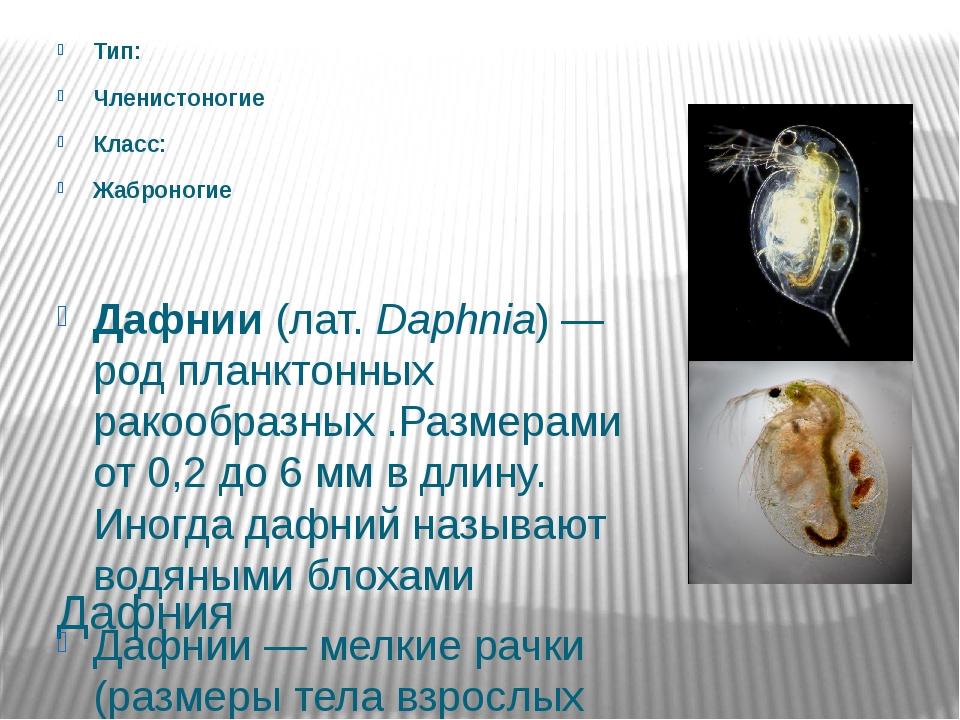 Дафния Тип: Членистоногие Класс: Жаброногие Дафнии (лат.Daphnia)— род планк...