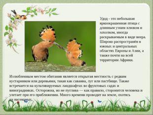 Удод - это небольшая яркоокрашенная птица с длинным узким клювом и хохолком,