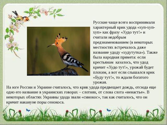 Русские чаще всего воспринимали характерный крик удода «хуп-хуп-хуп» как фраз...