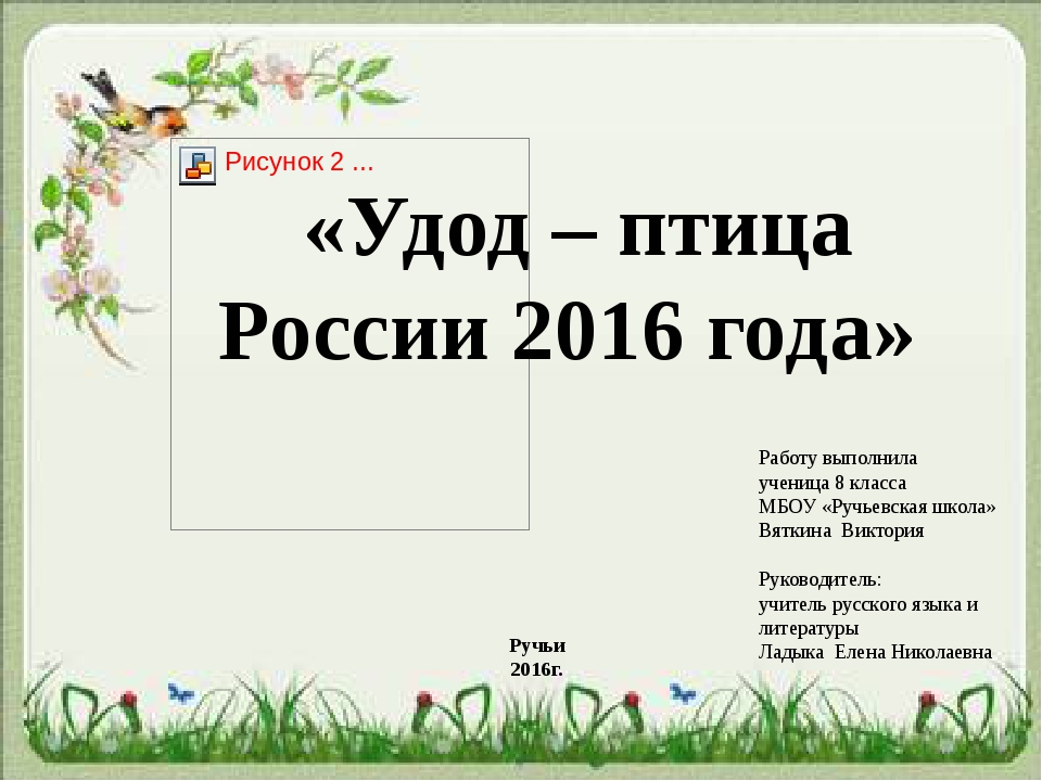 «Удод – птица России 2016 года» Работу выполнила ученица 8 класса МБОУ «Ручье...
