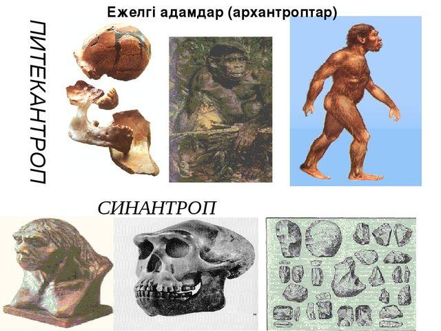 ПИТЕКАНТРОП Ежелгі адамдар (архантроптар) СИНАНТРОП