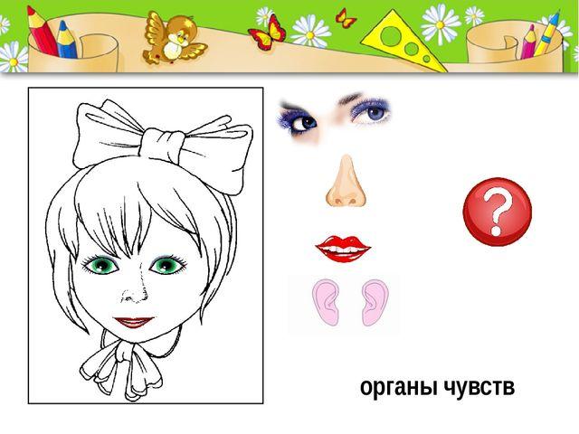 органы чувств ProPowerPoint.Ru