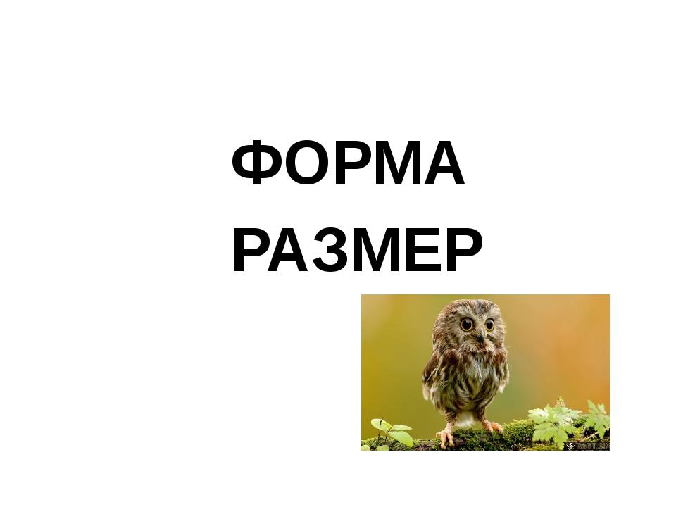 ФОРМА РАЗМЕР