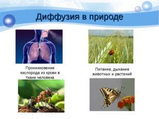 Диффузия в природе Проникновение кислорода из крови в ткани человека Питание,
