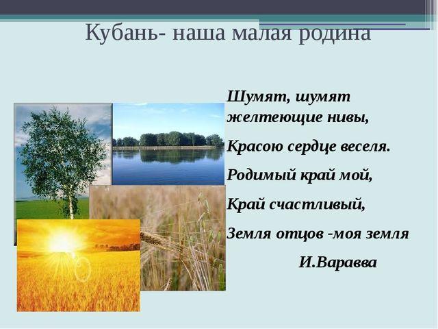 Кубань- наша малая родина Шумят, шумят желтеющие нивы, Красою сердце веселя....