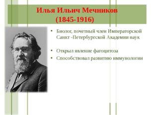 Илья Ильич Мечников (1845-1916) Биолог, почетный член Императорской Санкт -Пе