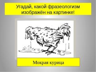 Угадай, какой фразеологизм изображён на картинке! Мокрая курица