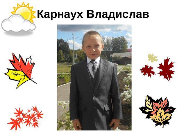 Карнаух Владислав