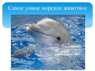 Самое умное морское животное