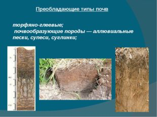 Преобладающие типы почв торфяно-глеевые; почвообразующие породы — аллювиальны