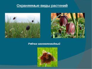Охраняемые виды растений Рябчик шахматовидный