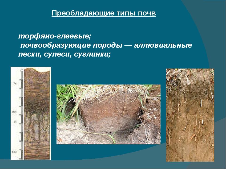 Преобладающие типы почв торфяно-глеевые; почвообразующие породы — аллювиальны...
