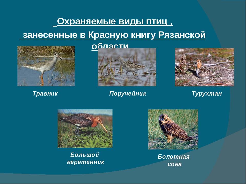 Охраняемые виды птиц , занесенные в Красную книгу Рязанской области Травник...