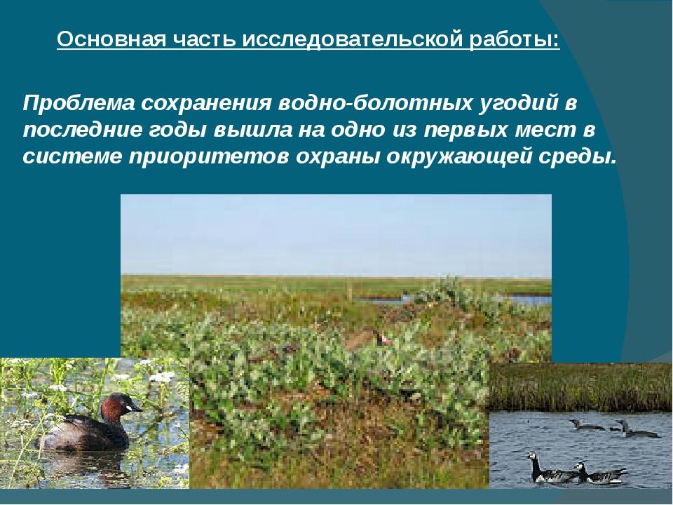 Основная часть исследовательской работы: Проблема сохранения водно-болотных у...