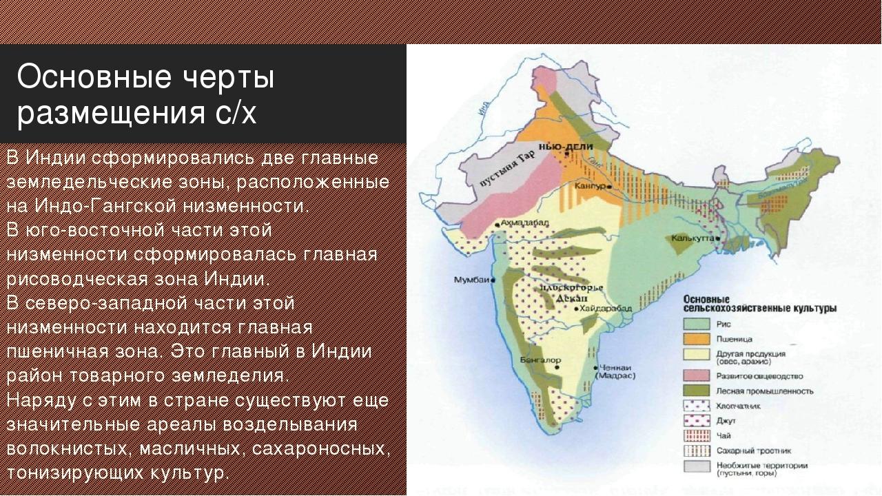 Основные черты размещения с/х В Индии сформировались две главные земледельчес...