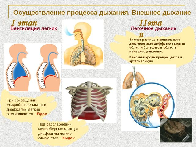 Осуществление процесса дыхания. Внешнее дыхание I этап Вентиляция легких IIэт...