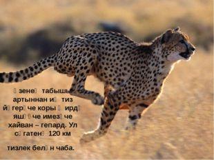 Үзенең табышы артыннан иң тиз йөгерүче коры җирдә яшәүче имезүче хайван – геп