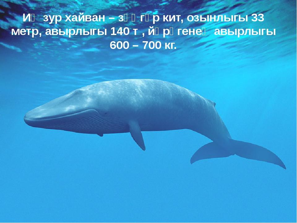 Иң зур хайван – зәңгәр кит, озынлыгы 33 метр, авырлыгы 140 т , йөрәгенең авыр...
