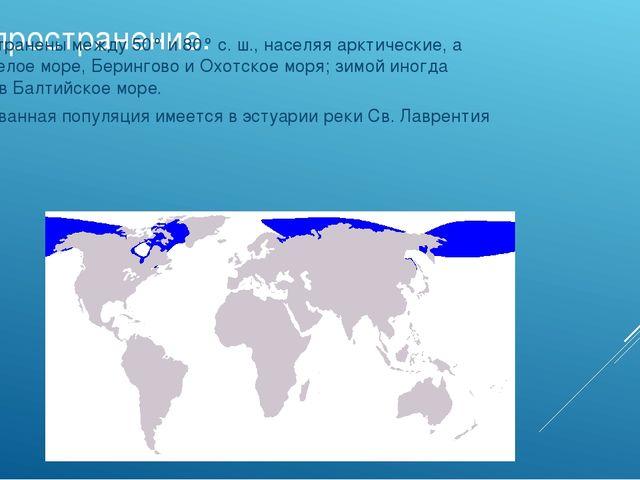 Распространение. Распространены между 50° и 80° с. ш., населяя арктические, а...