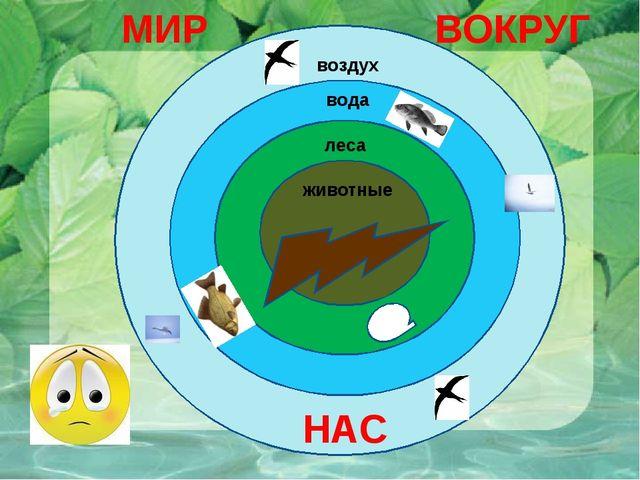 воздух вода леса животные МИР ВОКРУГ НАС