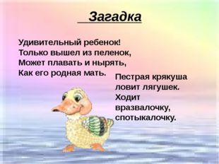 Загадка Удивительный ребенок! Только вышел из пеленок, Может плавать и нырят