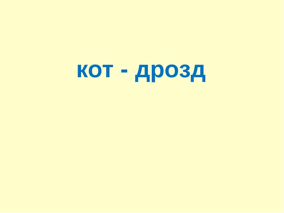 кот - дрозд