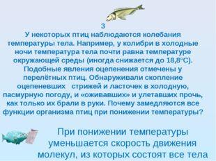 3 У некоторых птиц наблюдаются колебания температуры тела. Например, у колибр