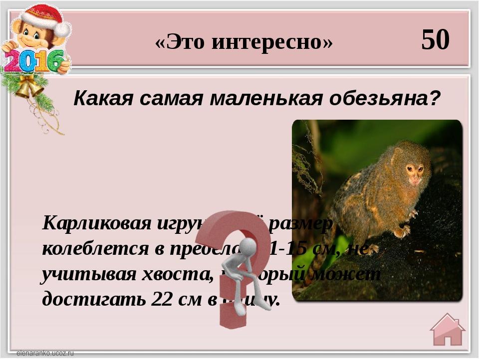 «Про Веру и Анфису» 20 В этом мультике у девочки была подружка обезьянка. Обе...