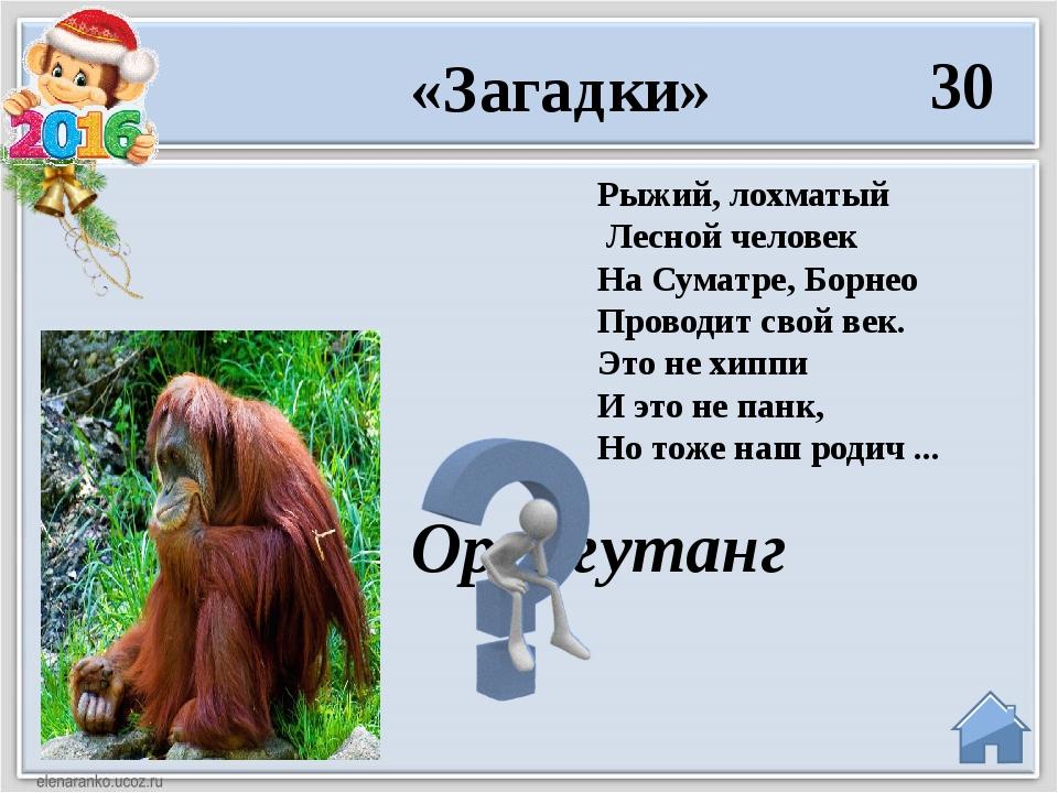 40 А бывают обезьяны - Вот такие великаны! Меряться не стоит силой Вам совету...