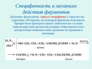 Специфичность и механизм действия ферментов Действие ферментов, строго специф