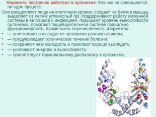 Ферменты постоянно работают в организме: без них не совершается ни один проц