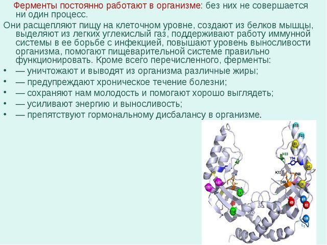 Ферменты постоянно работают в организме: без них не совершается ни один проц...