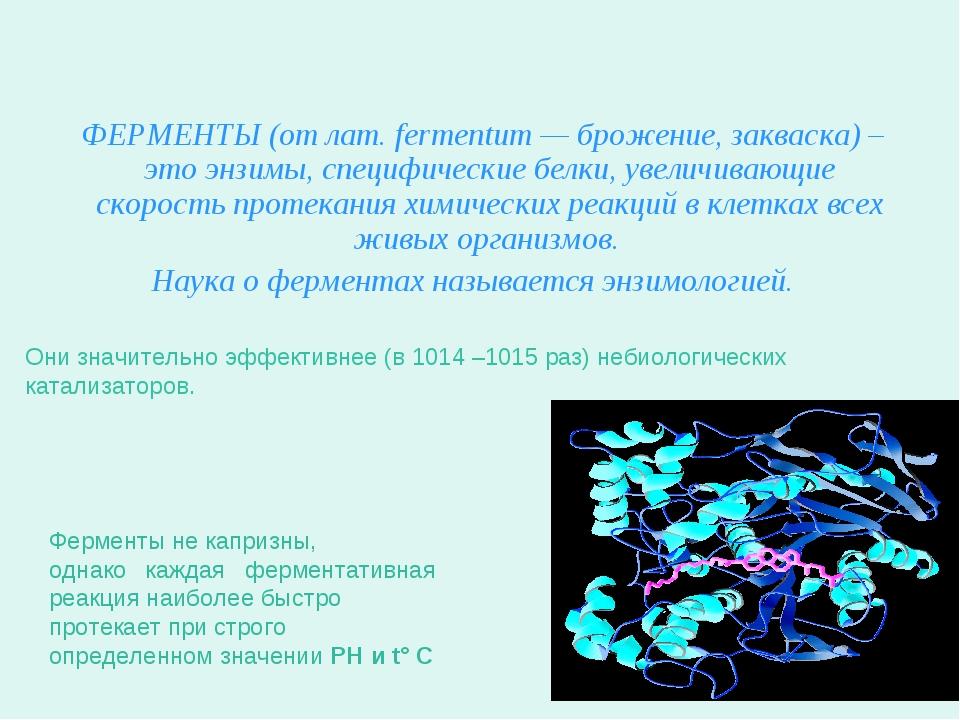 Что такое ферменты? ФЕРМЕНТЫ (от лат. fermentum — брожение, закваска) – это э...