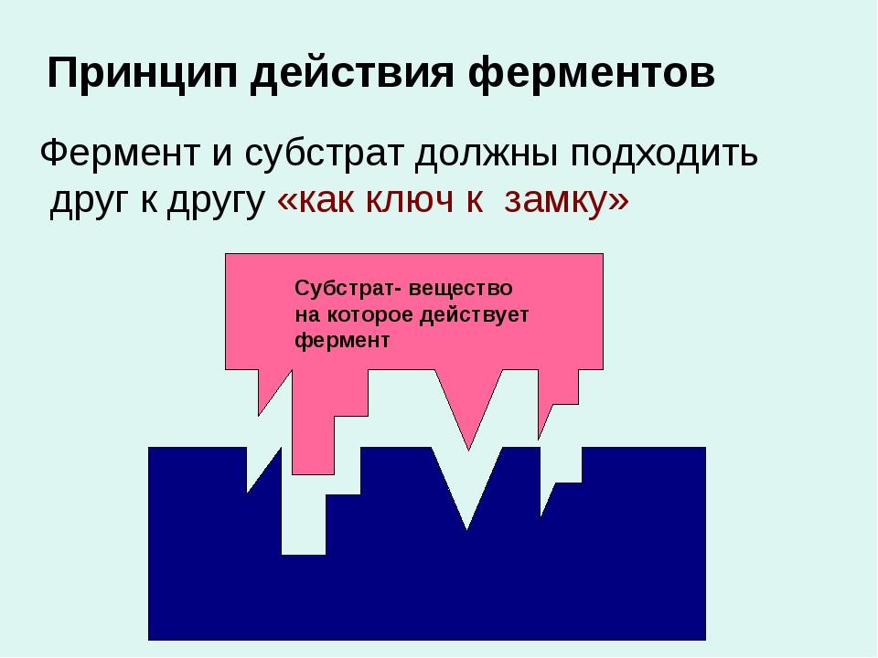 Принцип действия ферментов Фермент и субстрат должны подходить друг к другу «...