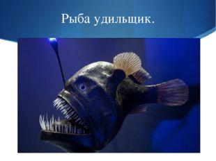 Рыба удильщик.