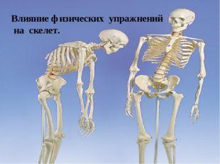 Влияние физических упражнений на скелет.
