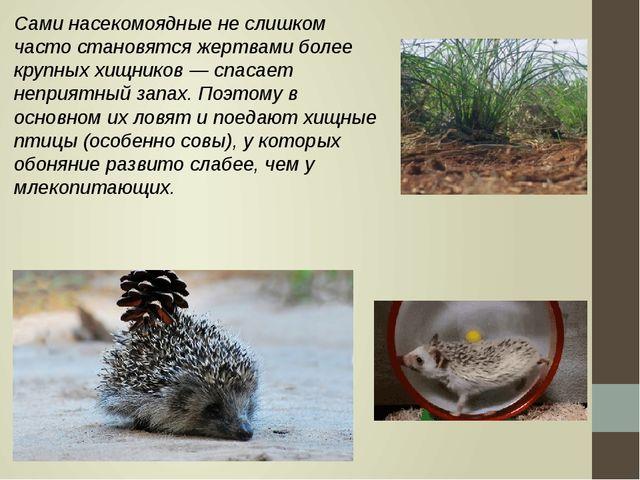 Сами насекомоядные не слишком часто становятся жертвами более крупных хищнико...