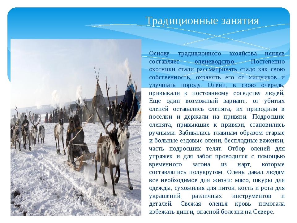 Традиционные занятия Основу традиционного хозяйства ненцев составляет оленево...