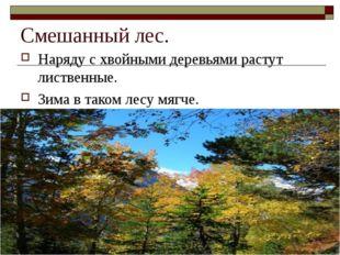 Смешанный лес. Наряду с хвойными деревьями растут лиственные. Зима в таком ле