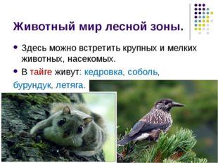 Животный мир лесной зоны. Здесь можно встретить крупных и мелких животных, на