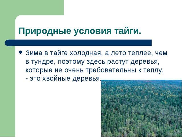 Природные условия тайги. Зима в тайге холодная, а лето теплее, чем в тундре,...