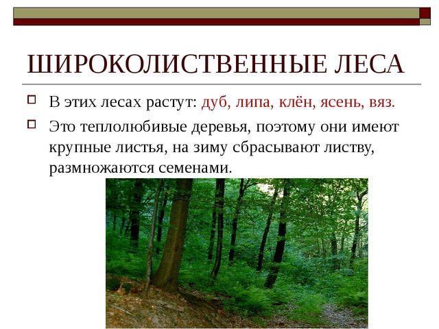 ШИРОКОЛИСТВЕННЫЕ ЛЕСА В этих лесах растут: дуб, липа, клён, ясень, вяз. Это т...