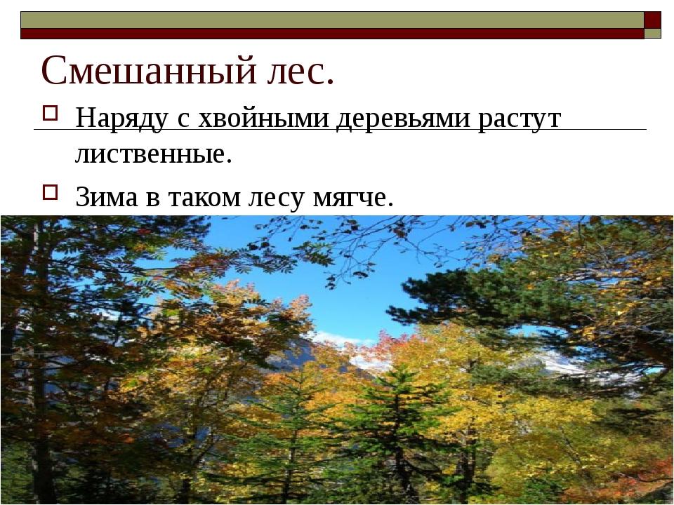 Смешанный лес. Наряду с хвойными деревьями растут лиственные. Зима в таком ле...