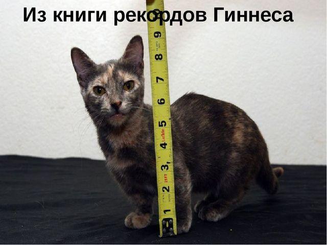 Кот без дураков скачать книгу бесплатно