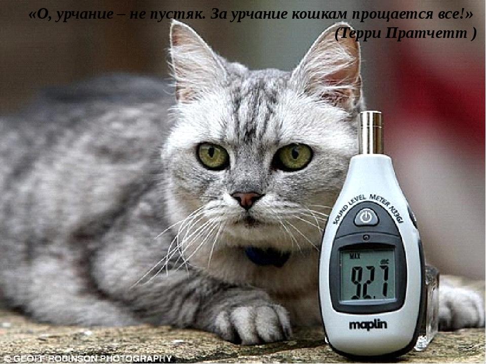 «О, урчание – не пустяк. За урчание кошкам прощается все!» (Терри Пратчетт )