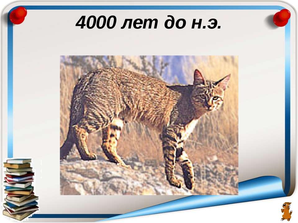 4000 лет до н.э.